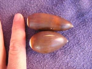 biggest acorns in the world?